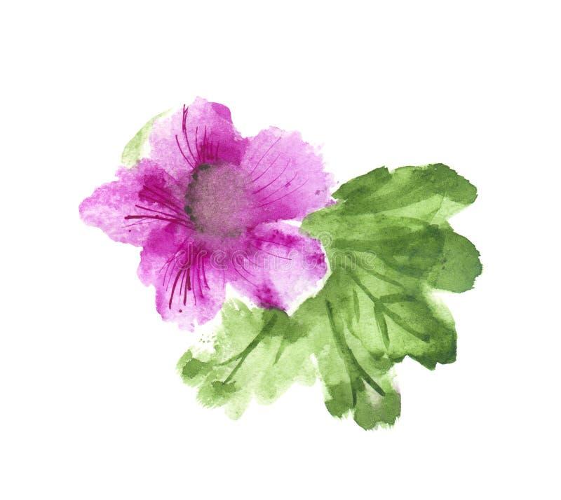 Il  dell'ibisco/Ñ hinese è aumentato con le foglie verdi acquerello, illustrazione disegnata a mano, isolata su bianco royalty illustrazione gratis