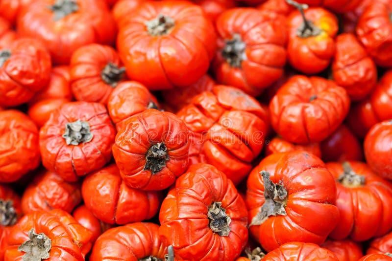 Il aethopicum rosso del solano del pomodoro dell'alimento etiopico, verdure tropicali di derisione dell'Africa raccoglie il fondo fotografie stock