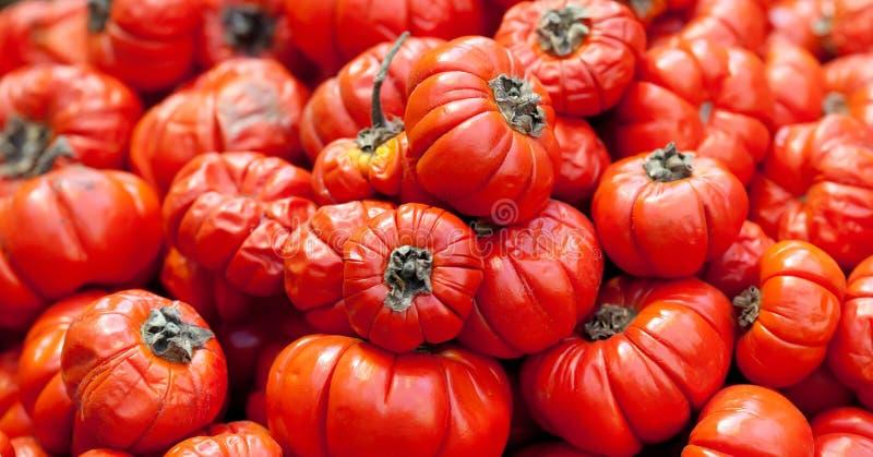 Il aethopicum rosso del solano del pomodoro dell'alimento etiopico, verdure tropicali di derisione dell'Africa raccoglie il fondo immagine stock libera da diritti