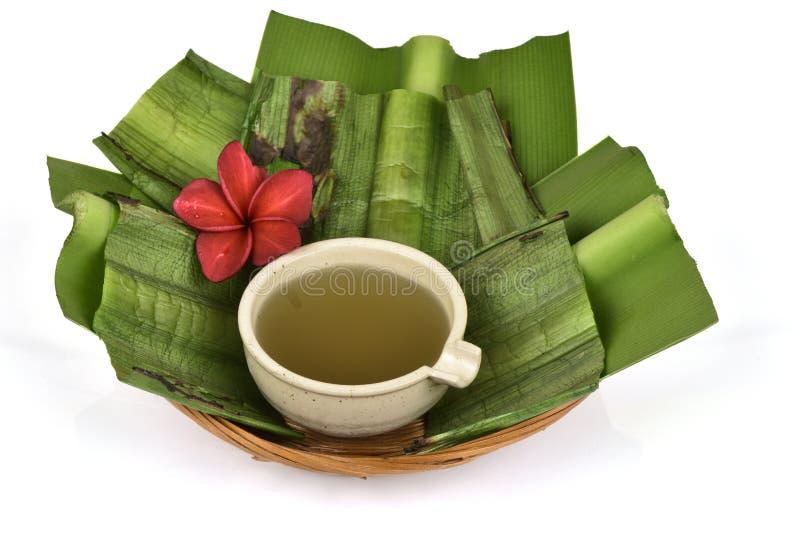 Il asiaticum di Crinum, gel delle foglie verdi ha medicina della proprietà immagine stock libera da diritti