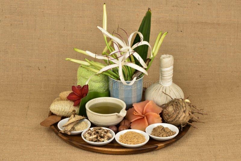 Il asiaticum di Crinum, gel delle foglie verdi ha medicina della proprietà fotografia stock libera da diritti