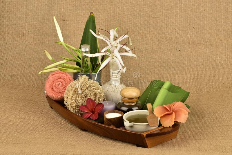 Il asiaticum di Crinum, gel delle foglie verdi ha medicina della proprietà immagini stock libere da diritti