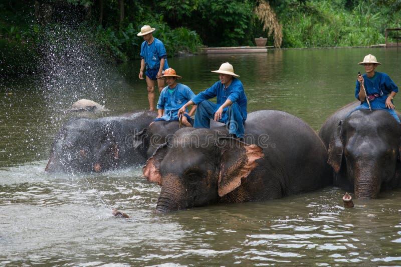Il bagno dei Mahouts e pulisce gli elefanti nel fiume fotografie stock libere da diritti