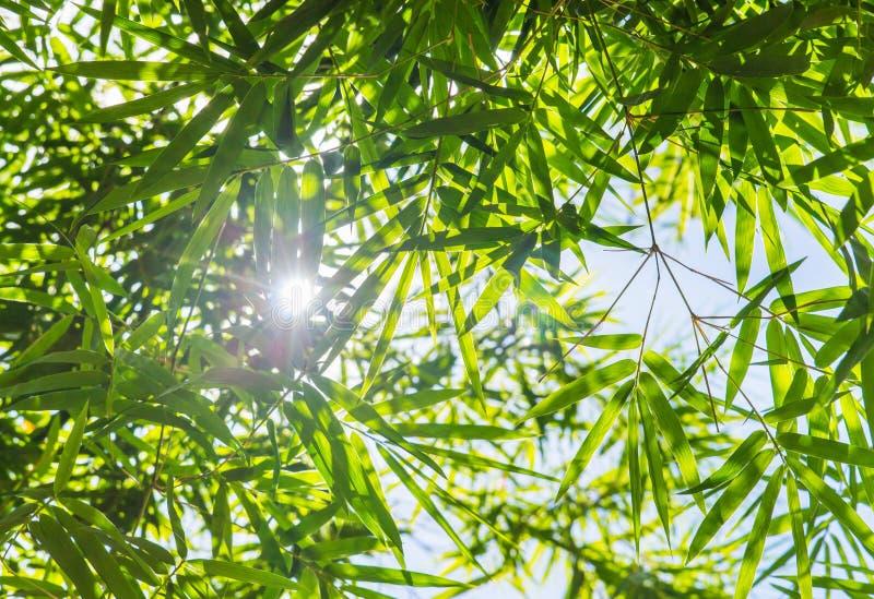 Il bambù lascia il fondo immagini stock