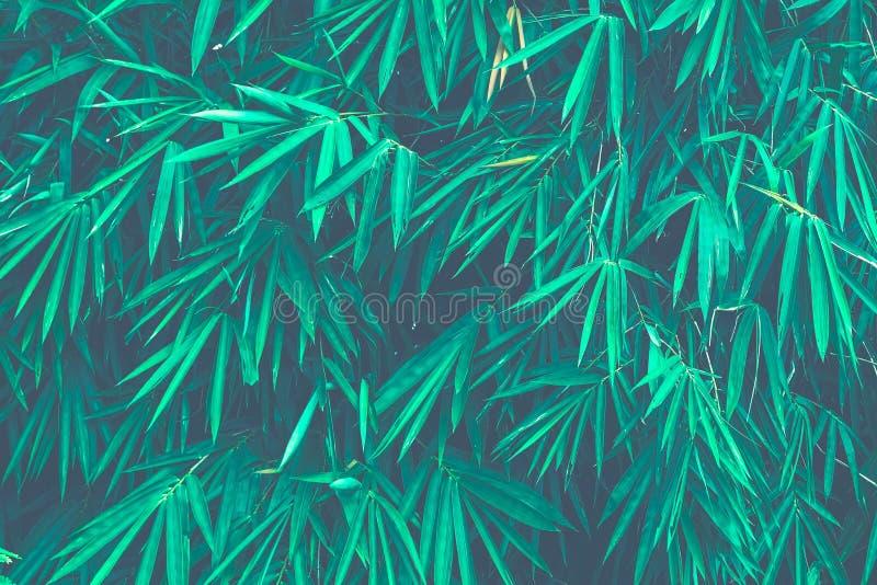 Il bambù verde lascia il blocco per grafici Questa immagine per fondo fotografia stock libera da diritti
