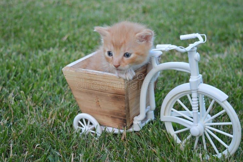 Il bambino del gatto più dolce che gioca su un bicicle fotografia stock