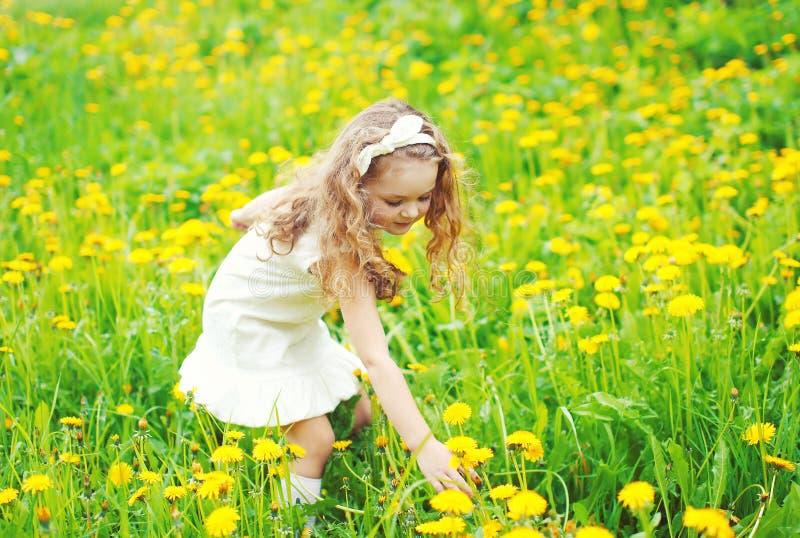 Il bambino della bambina in prato che seleziona il dente di leone giallo fiorisce immagini stock
