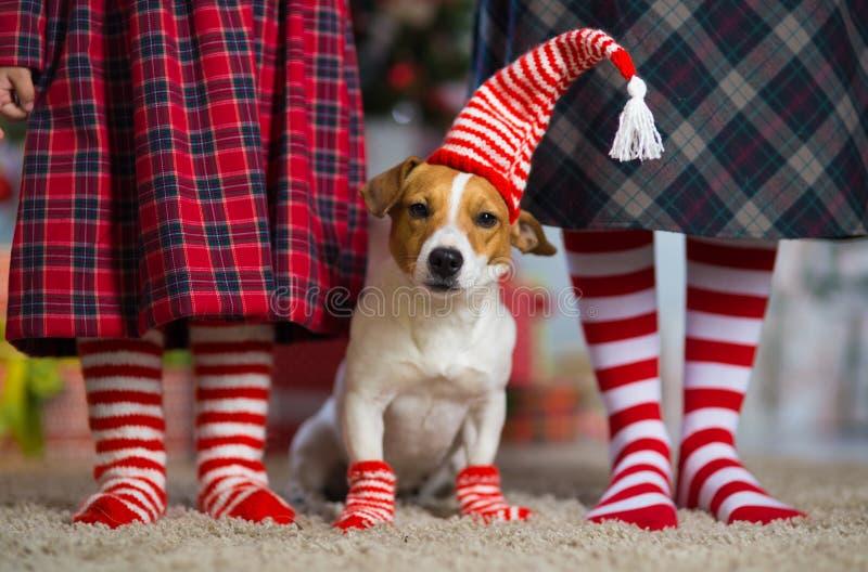 Il bambino della ragazza celebra il Natale con il cane fotografie stock libere da diritti