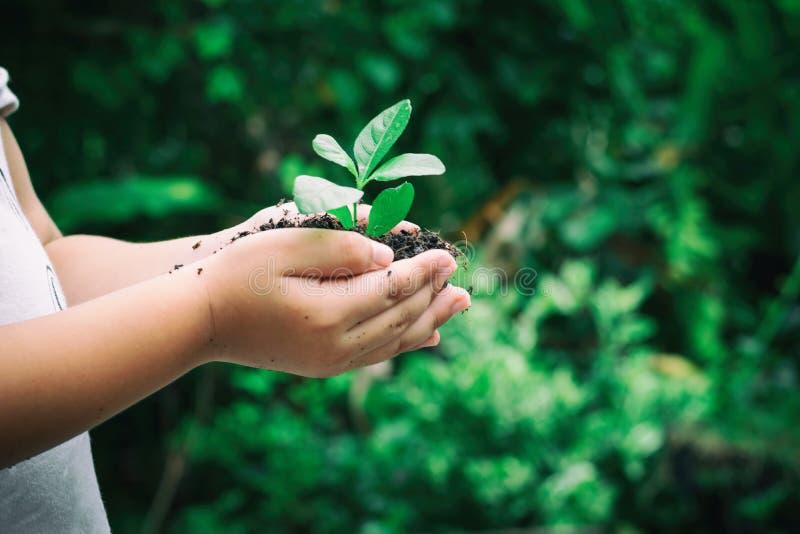 Il bambino di concetto dell'ecologia passa a pianta della tenuta un alberello dell'albero con la Giornata mondiale dell'ambiente fotografie stock libere da diritti
