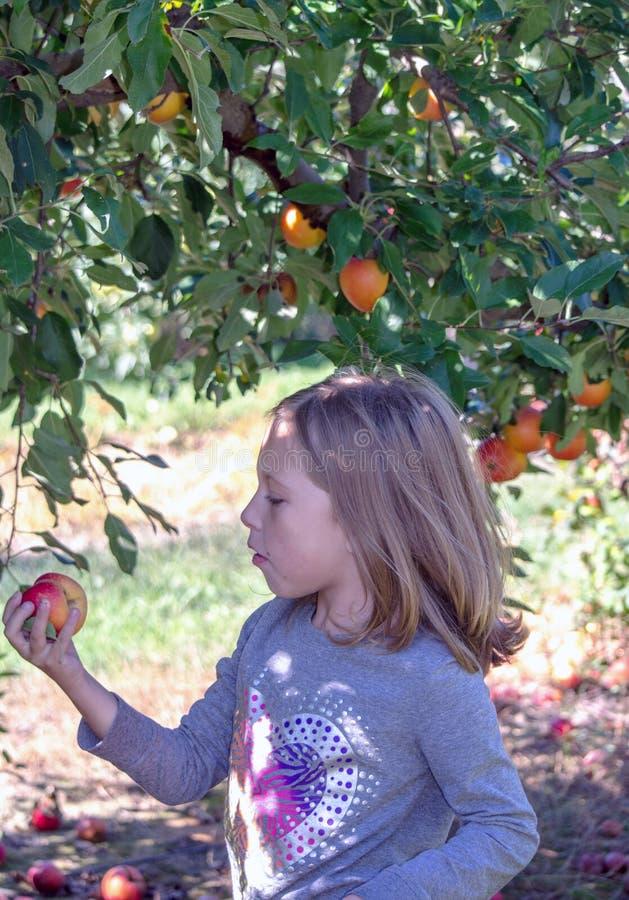 Il bambino esamina una mela selezionata fresca del Michigan fotografia stock libera da diritti