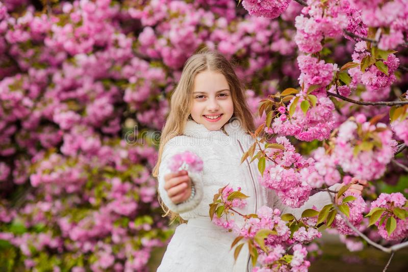 Il bambino gode della vita senza allergia Fiori di fiuto Ragazza che gode dell'aroma floreale Concetto di allergia del polline Il fotografia stock libera da diritti