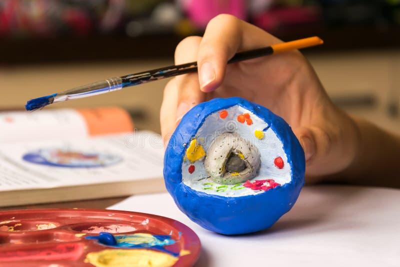 Il bambino impara la biologia, studia la struttura della cellula La cellula è fatta di argilla ed è dipinta con tempera fotografia stock