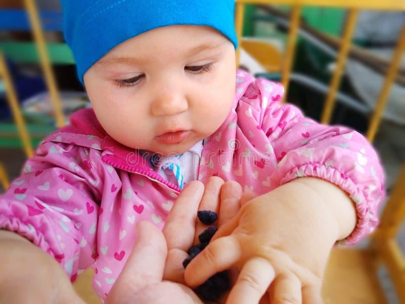 Il bambino mangia il caprifoglio immagini stock libere da diritti