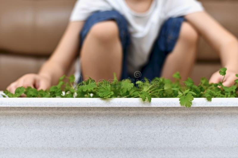 Il bambino sta sedendosi vicino al raccolto sviluppato immagine stock libera da diritti