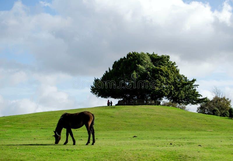 Il banco di Bolton in nuova foresta fotografie stock libere da diritti