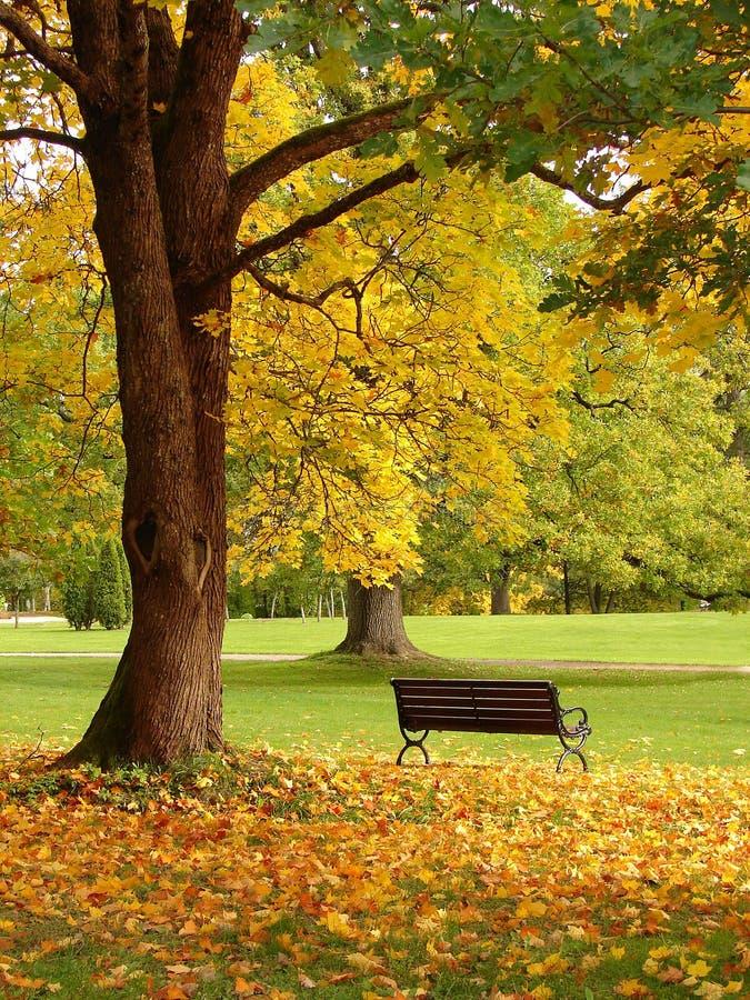Il banco e la quercia in città parcheggiano in autunno fotografia stock libera da diritti
