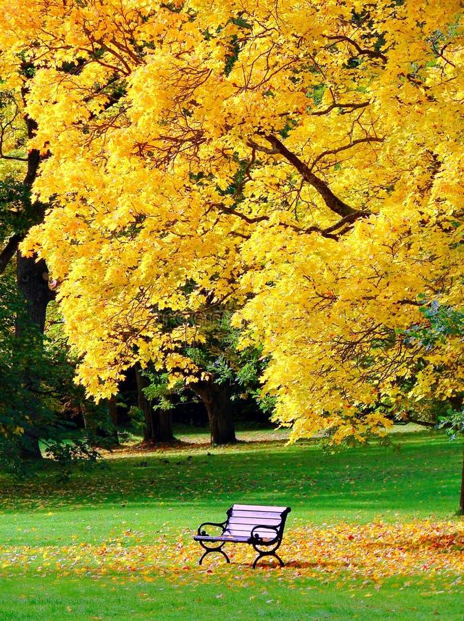 Il banco e la quercia in città parcheggiano in autunno immagine stock libera da diritti