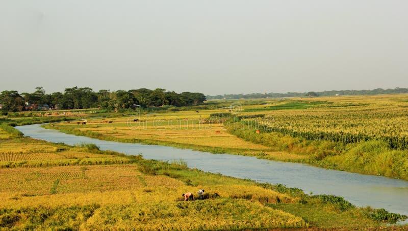Il Bangladesh produttivo fotografia stock libera da diritti