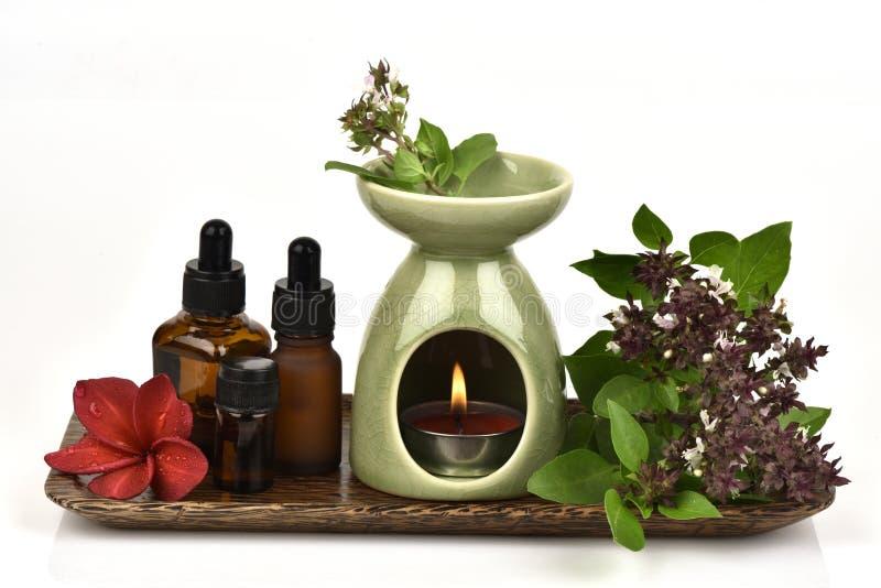 Il basilico, il basilico tailandese, i fiori e le foglie verdi hanno l'aroma ed olio essenziale che medicina delle proprietà fotografia stock libera da diritti