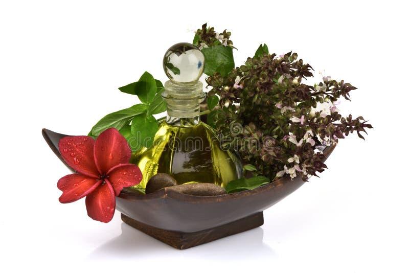 Il basilico, il basilico tailandese, i fiori e le foglie verdi hanno l'aroma ed olio essenziale che medicina delle proprietà fotografie stock