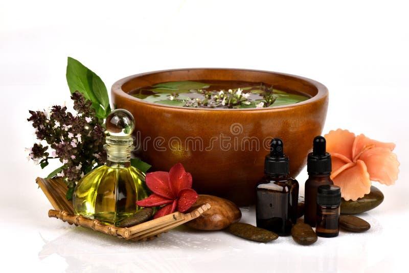 Il basilico, il basilico tailandese, i fiori e le foglie verdi hanno l'aroma ed olio essenziale che medicina delle proprietà immagini stock