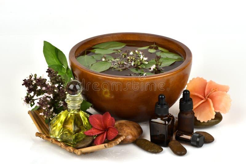 Il basilico, il basilico tailandese, i fiori e le foglie verdi hanno l'aroma ed olio essenziale che medicina delle proprietà immagine stock libera da diritti