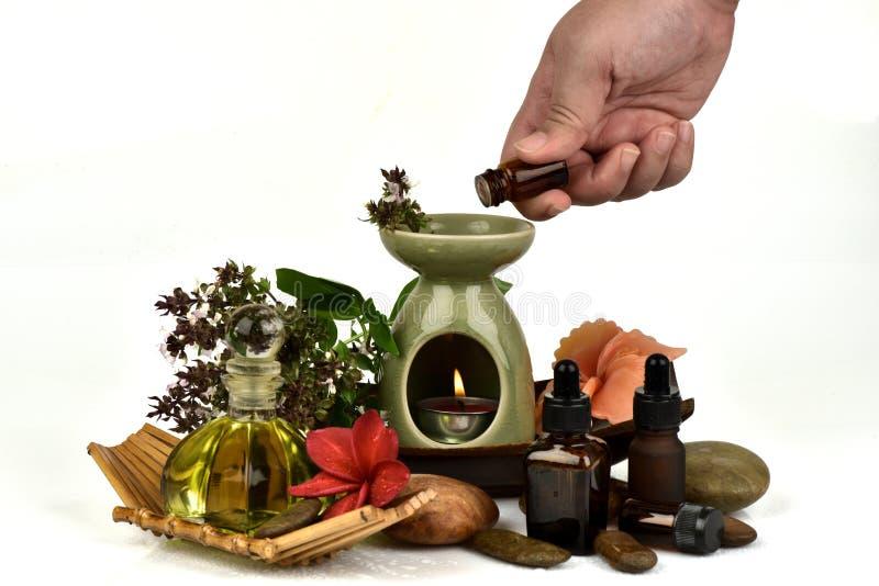 Il basilico, il basilico tailandese, i fiori e le foglie verdi hanno l'aroma ed olio essenziale che medicina delle proprietà fotografie stock libere da diritti