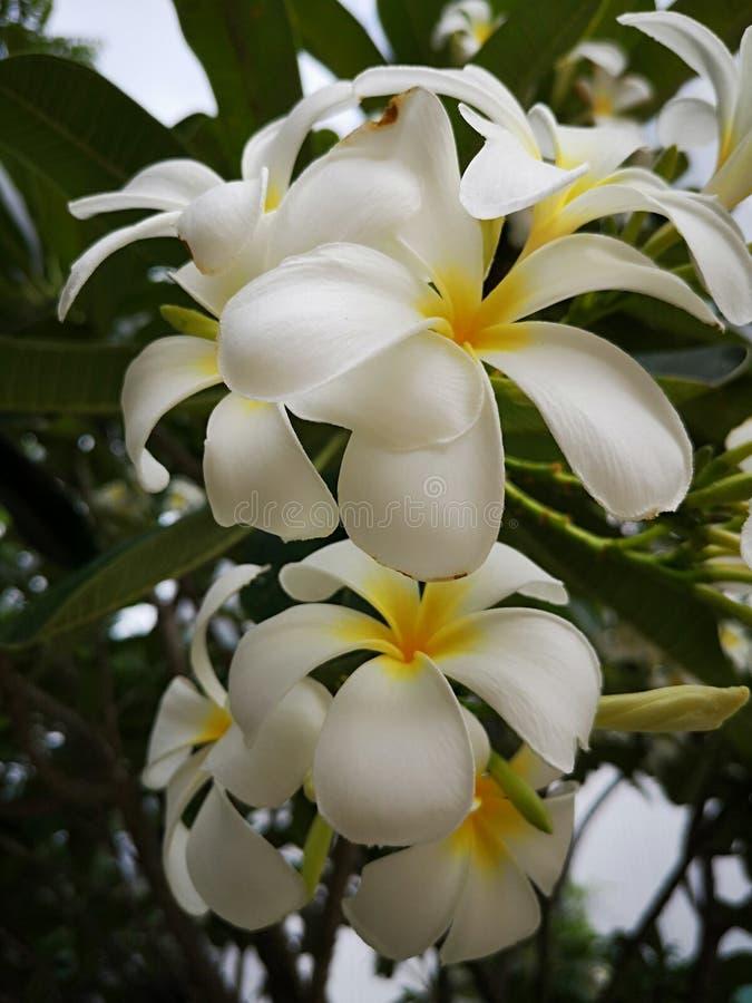 Il bei fiore e natura sono la parte della nostra vita fotografia stock