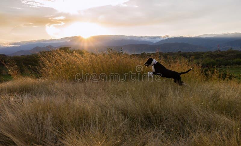 Il bello animale domestico divertendosi su un pomeriggio soleggiato fotografia stock
