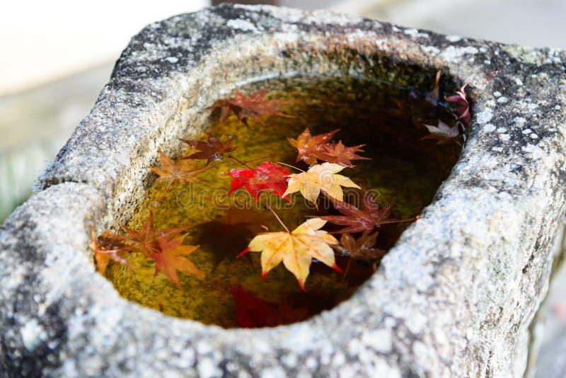 il bello colore di autunno delle foglie di acero rosse del Giappone in pietra b immagine stock