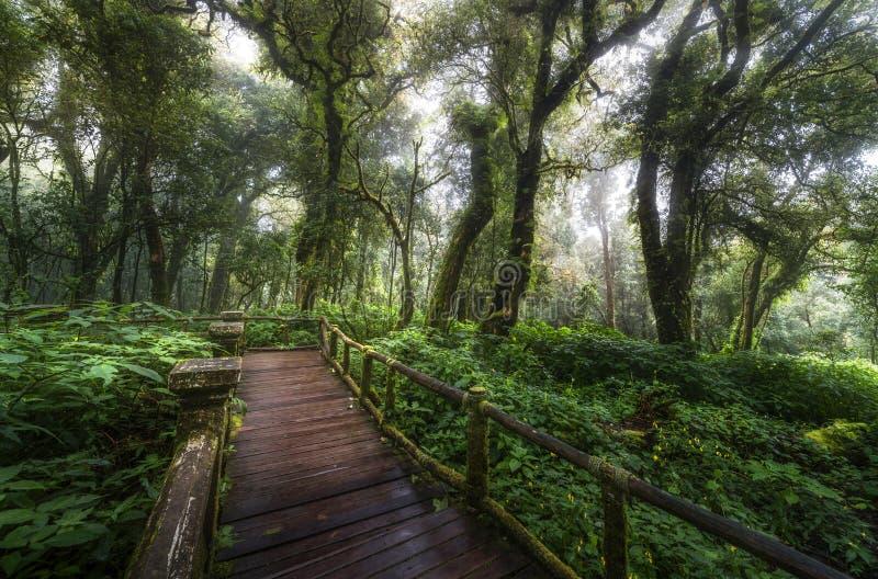 Il bello della foresta della nuvola del sentiero didattico di Ang Ka fotografie stock libere da diritti