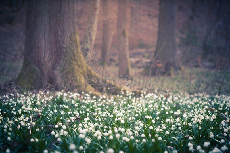 Il bello fiore della molla con la fantasia vaga ha offuscato il fondo del bokeh Carta da parati all'aperto fresca del paesaggio d fotografia stock libera da diritti