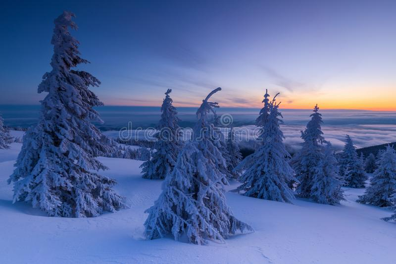 Il bello fondo con gli alberi dell'inverno ha coperto di neve fresca nelle montagne con il cielo variopinto all'alba immagini stock