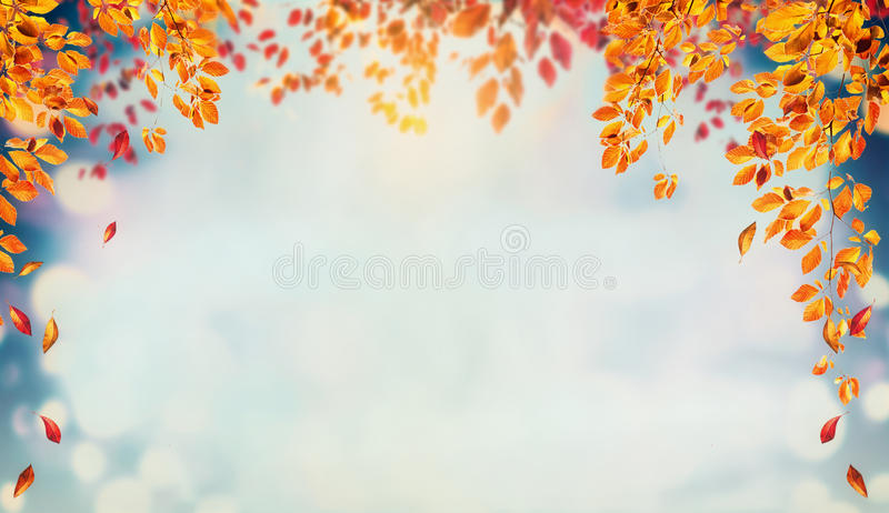 Il bello fondo del fogliame di autunno con i brunch e l'albero di caduta va al cielo fotografia stock libera da diritti