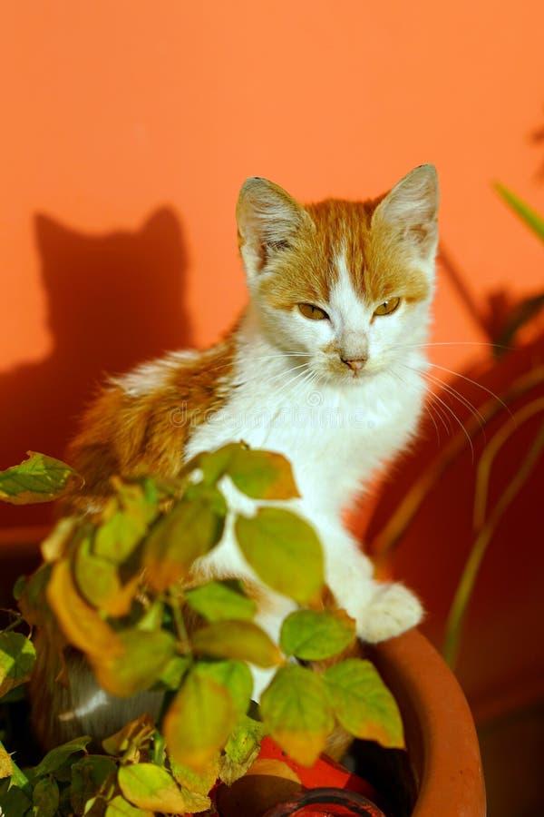 Il bello gattino si rilassa al sole fotografie stock libere da diritti