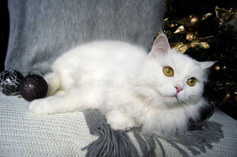 Il bello gatto bianco con gli occhi verdi si trova su una sciarpa grigia sui precedenti di un albero di Natale e delle decorazion immagini stock