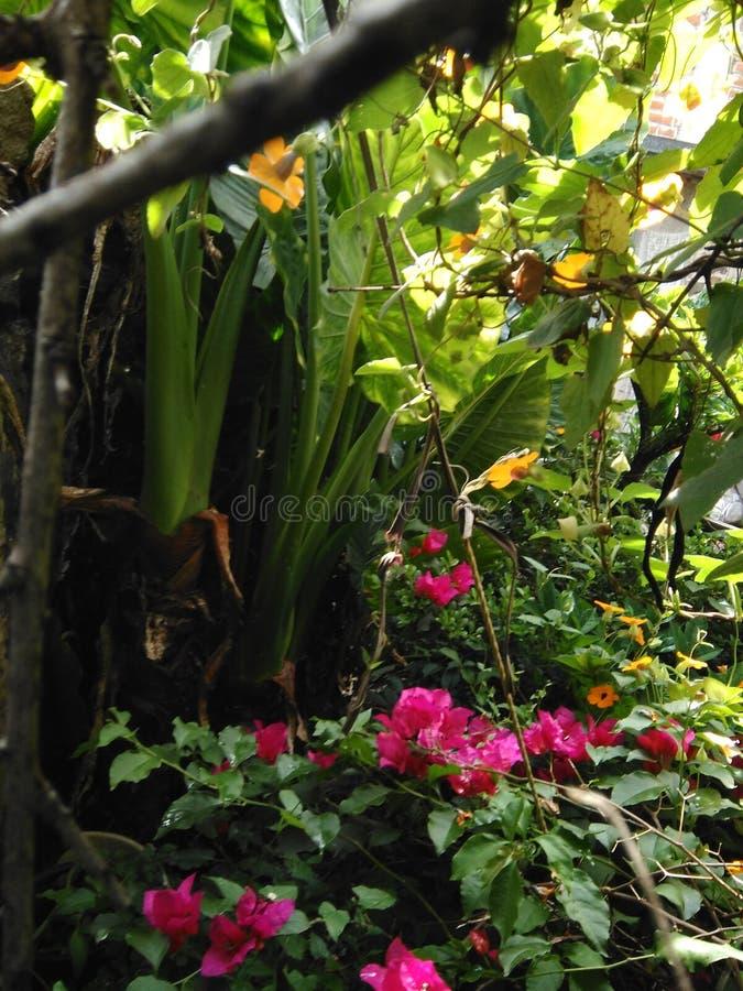 Il bello giardino fotografia stock libera da diritti