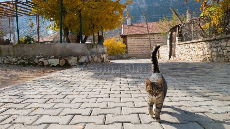Il bello giovane gatto senza tetto va verso la macchina fotografica Vita del villaggio in Turchia ANIMALE DOMESTICO AMICHEVOLE immagini stock