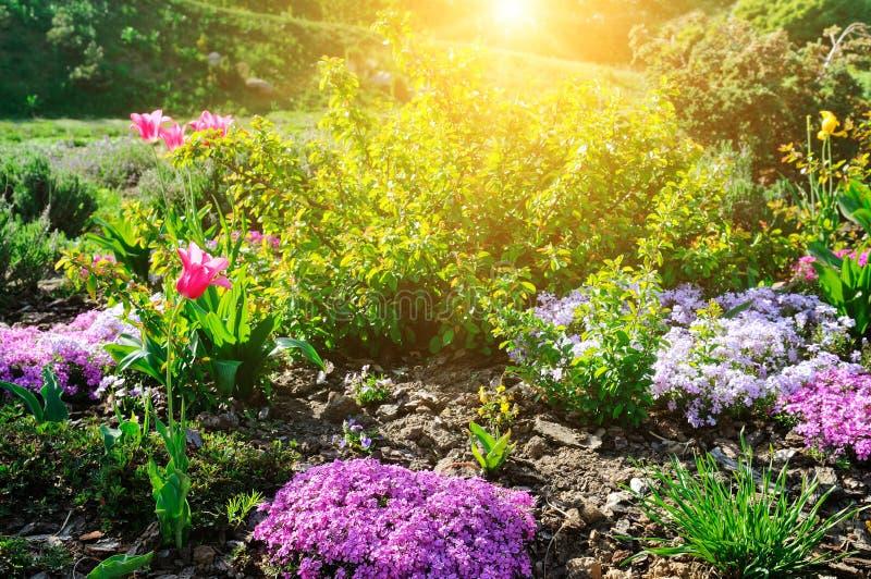 Il bello letto di fiore con la prima molla fiorisce immagine stock