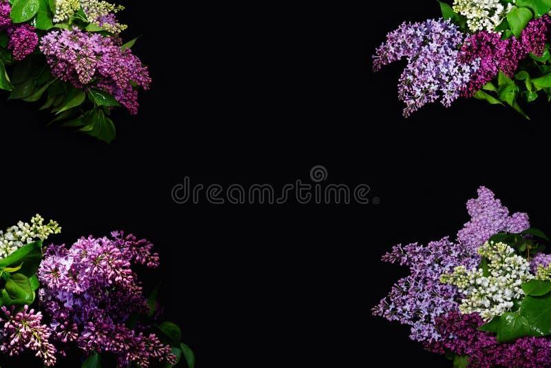 Il bello lillà su un fondo nero fotografia stock libera da diritti