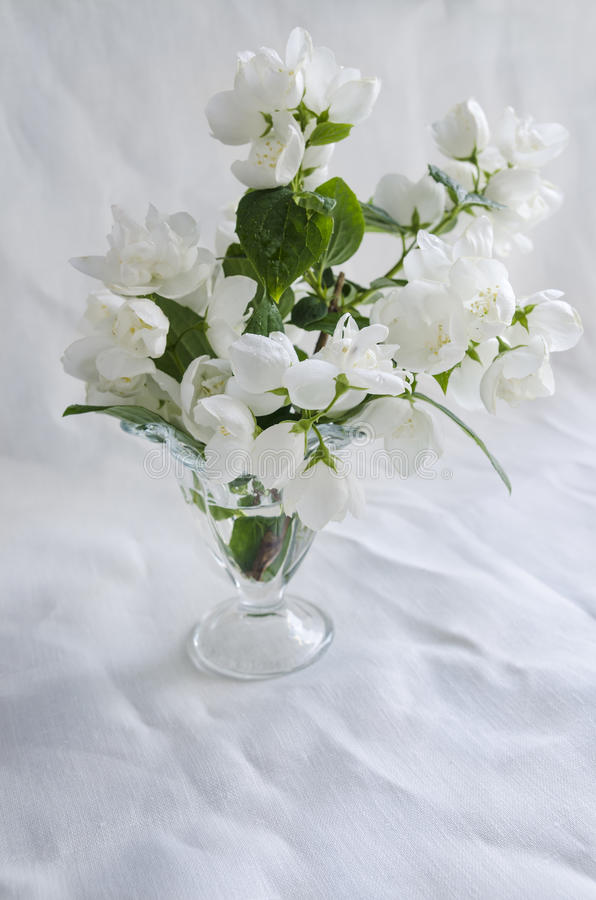Download Il Bello Mazzo Del Gelsomino In Vaso Di Vetro Su Fondo Bianco Ha Sgualcito La Tela Immagine Stock - Immagine di fogliame, disegno: 55360555