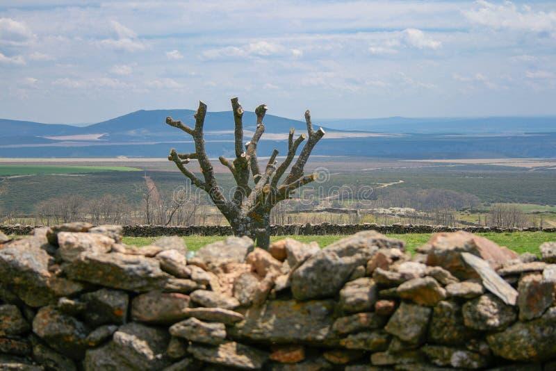 Il bello paesaggio della Castiglia con una parete di pietra, un albero ha potato, montagne del fodo e un cielo blu con le nuvole immagini stock libere da diritti