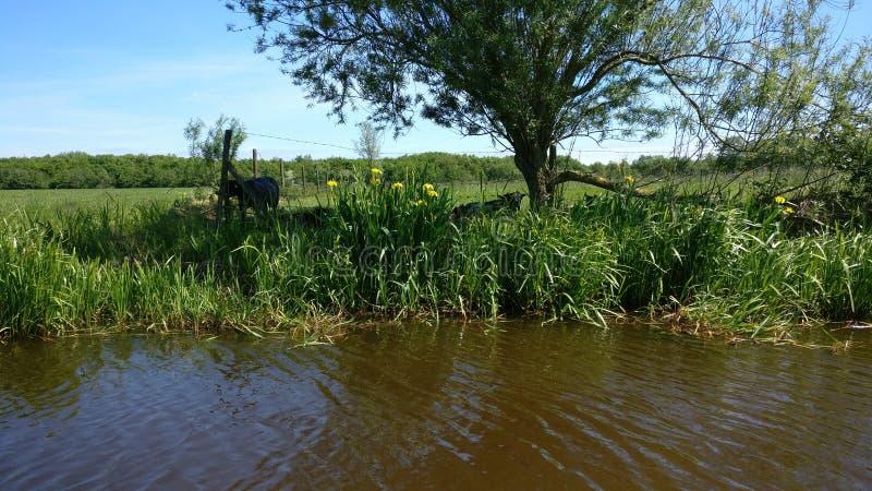 Il bello paesaggio in Frisia immagine stock