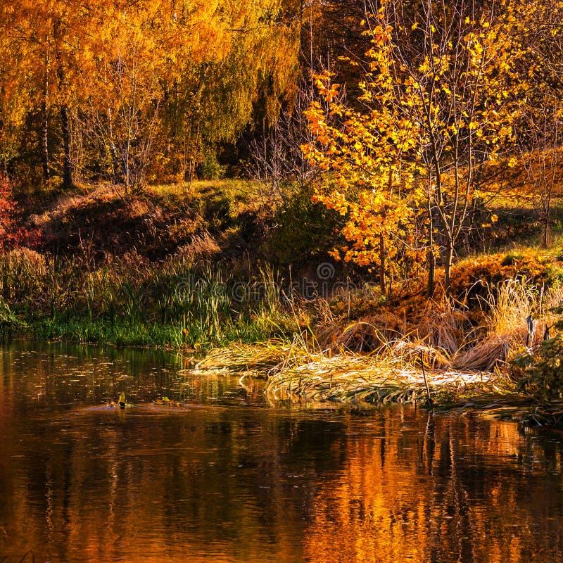 Il bello parco di autunno con gli alberi variopinti ha riflesso nell'acqua fotografia stock libera da diritti