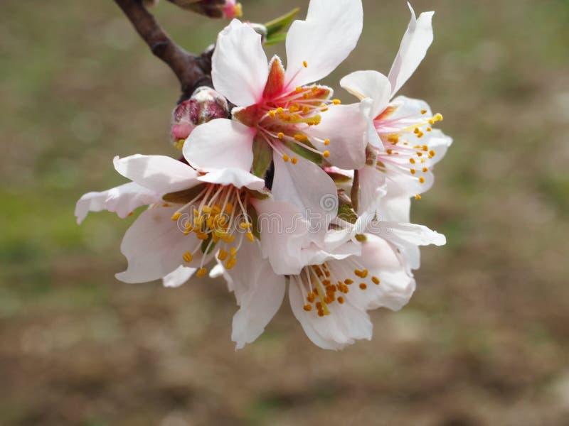 Il bello piccolo fiore selvaggio immagine stock libera da diritti