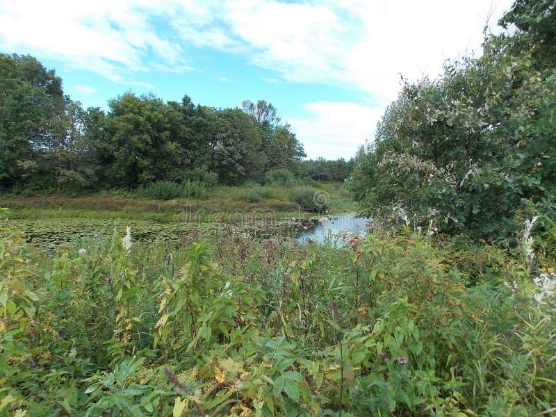 Il bello punto di vista dell'erba verde sulla banca del lago invaso immagini stock libere da diritti