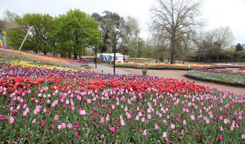 Il bello tulipano variopinto fiorisce Floriade immagine stock libera da diritti