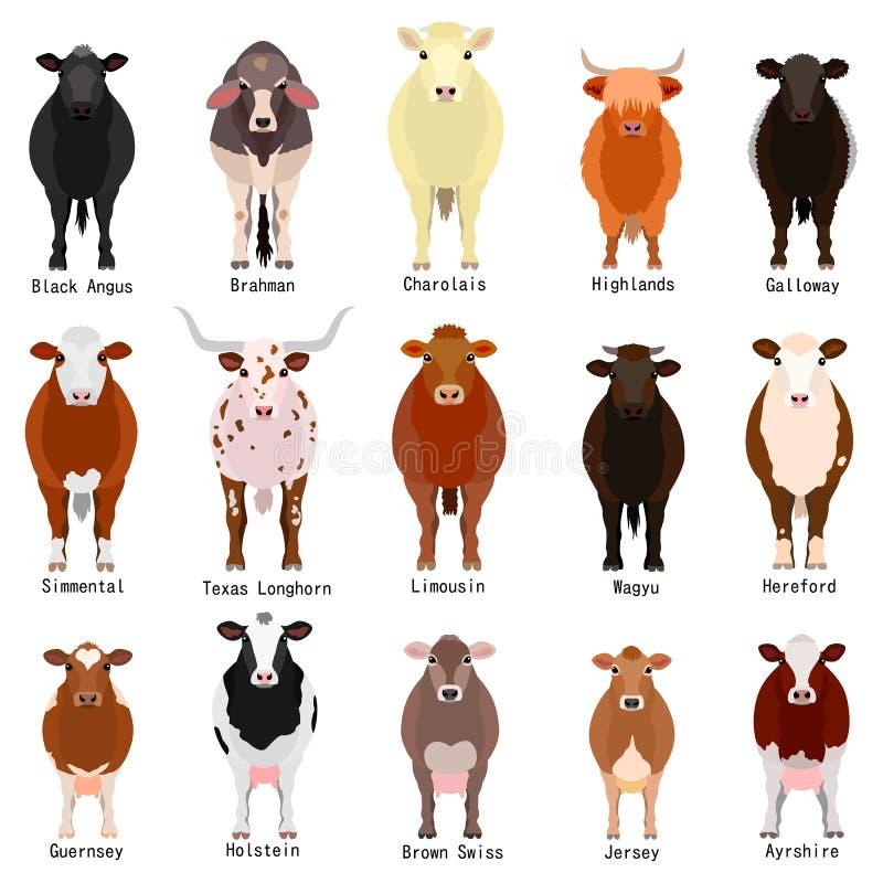 Il bestiame traccia una carta di con le razze nomina illustrazione vettoriale
