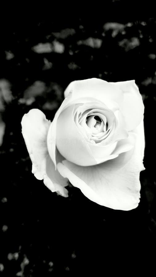 Il bianco è ancora bianco fotografia stock libera da diritti