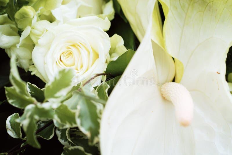 Il bianco è aumentato nel mazzo di cerimonia nuziale fotografie stock